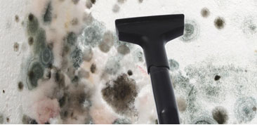 Barrington-Rhode Island-black-mold-removal