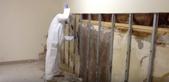 Cabot-Arkansas-mold-removal
